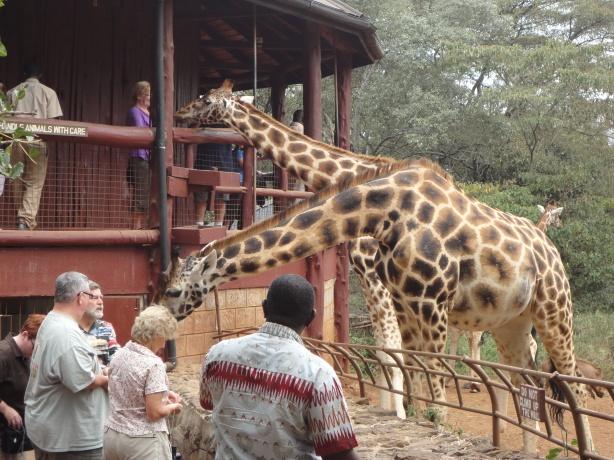 At the Giraffe Center, Nairobi