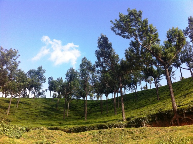 Tea Estates - Munnar