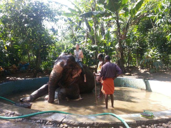 Elephant Jacuzzi