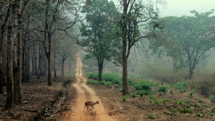 Nagarhole National Park, Kabini